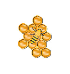 Bee honeycomb with honey bee vector