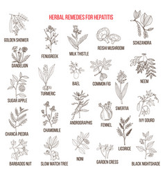 Best herbal remedies for hepatitis vector