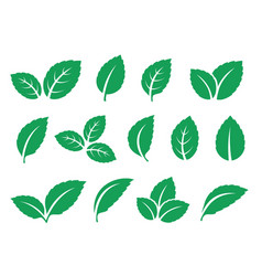 blue mint leaves set icons on white vector image