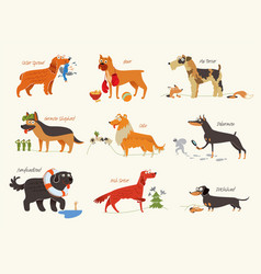 Dog breeds working dogs vector