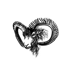 Ink sketch head mouflon vector