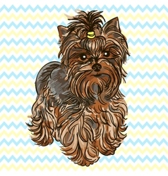 Puppy Yorkshire Terrier vector image