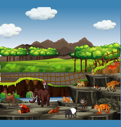 scene with many animals at zoo vector image
