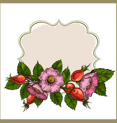 vintage frame with rose hips vector image