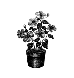 Black and white drawing of flower vector image vector image