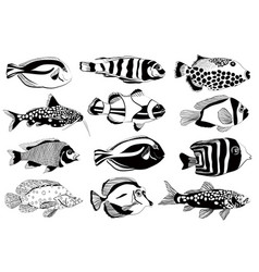 set of aquarium fish black and white design vector image