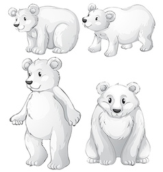 Four white polar bears vector
