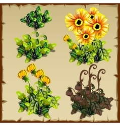 Stages of growth flowers planting and withering vector