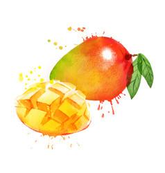 Watercolor mango vector