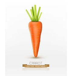 carrot isolated on a white background vector image vector image