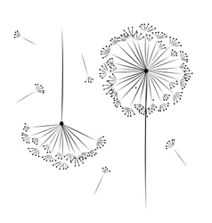 Dandelion flower for your design vector image