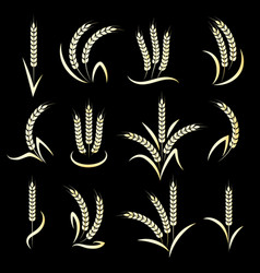golden wheat ears on black background vector image vector image