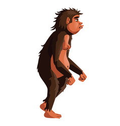 Ancient monkey human ancestor vector