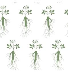 Ginseng seamless pattern vector