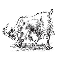Goat vintage vector