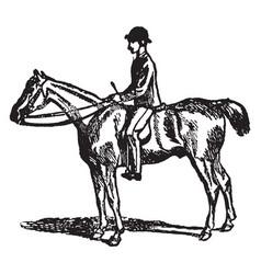 Horse-riding vintage vector