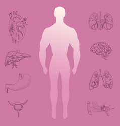 Human silhouette and hand drawn organs vector