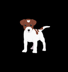 little dog with isolated black background vector image