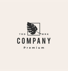 monstera leaf square hipster vintage logo icon vector image