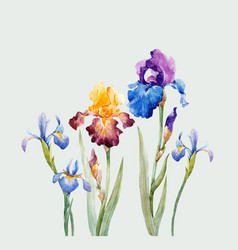 watercolor iris composition vector image vector image