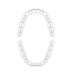 teeth chart tooth vector image