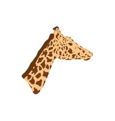 giraffe head and neck vector image