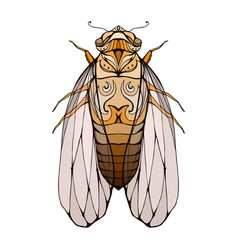 colorful cicada with boho pattern eleme vector image