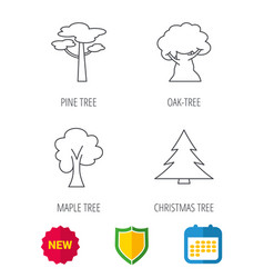 Pine tree maple and oak-tree icons vector
