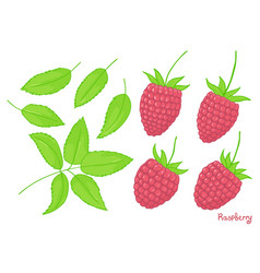 solated elements of a forest raspberry set of vector image