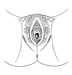 Human female genitalia outline external vector image vector image