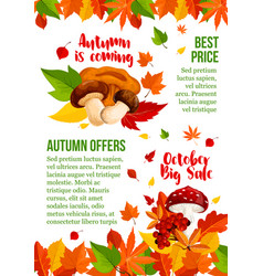 Autumn sale poster leaf and mushroom fall vector