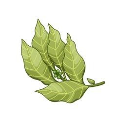 Bay leaf colored botanical vector image