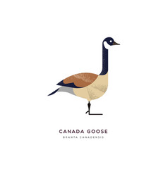 canada goose duck bird isolated animal cartoon vector image