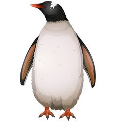 Gentoo Penguin vector