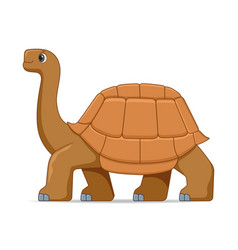 Giant galapagos tortoise standing on a white vector