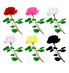 various red pink white yellow rose stem vector image