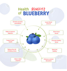 Health benefits blueberry blueberries vector