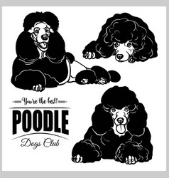 Poodle - set isolated on white vector