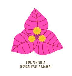 primavera tropical flower vector image