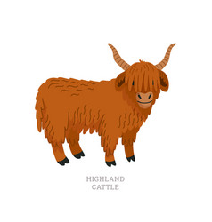 Rare animals collection highland cattle scottish vector