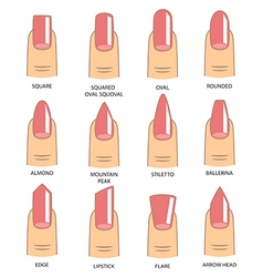 set different shapes nails on white nail vector image