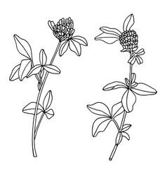 set of black contour clover on white vector image
