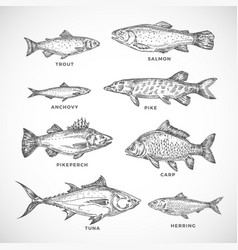 hand drawn ocean or sea and river fish set a vector image