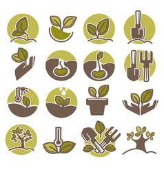 Tree planting and growing process infographic vector