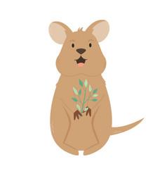 a cute australian quokka animal character design vector image