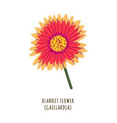 blanket flower vector image