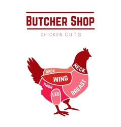 Cuts of chicken butcher diagram vector image