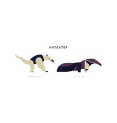 wild anteater isolated animal cartoon set vector image