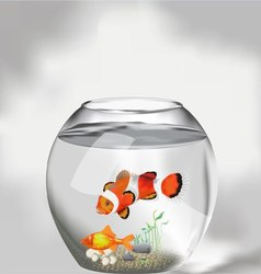 Aquarium vector image vector image