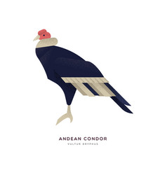 Andean condor bird isolated wild zoo animal vector